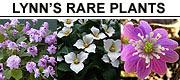 Lynn's Rare Plants