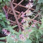 napifolia 8